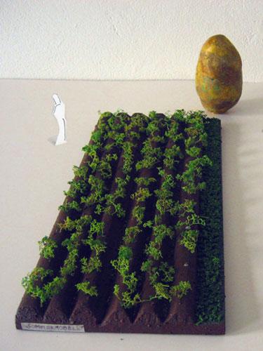 ziemniakfeld